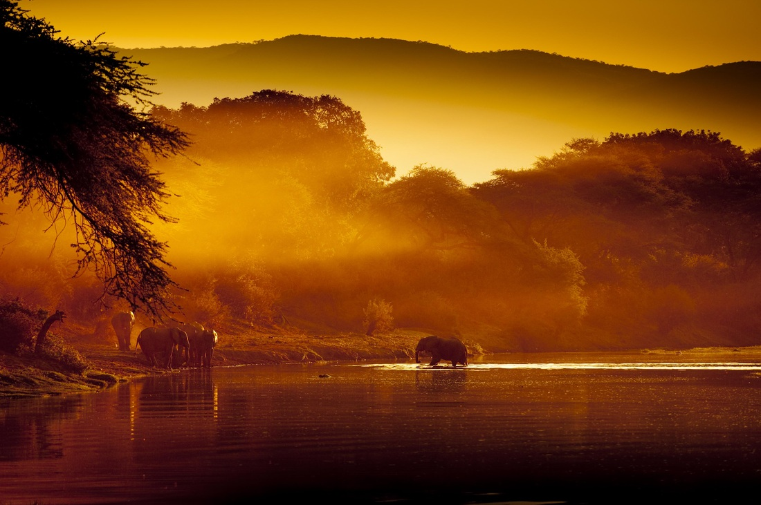 Elephants at Lower Zambezi National Park